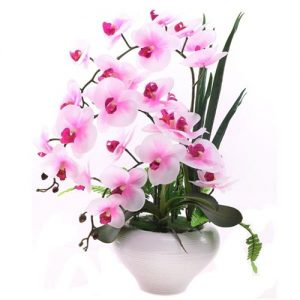orchid-butterfly